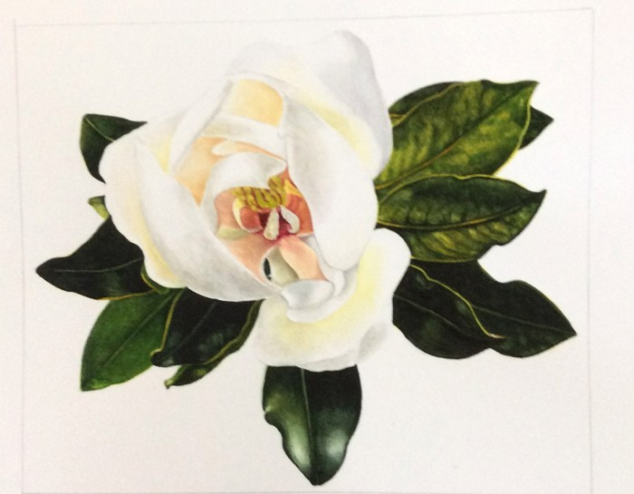 Carol's magnolia watercolour painting